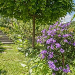 Pflanzengalerie: Startbild